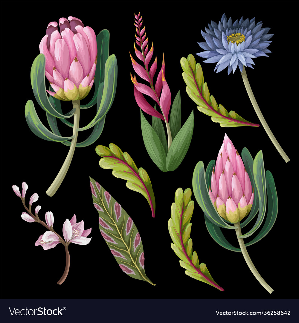 Protea and tropical flowers isolated trendy