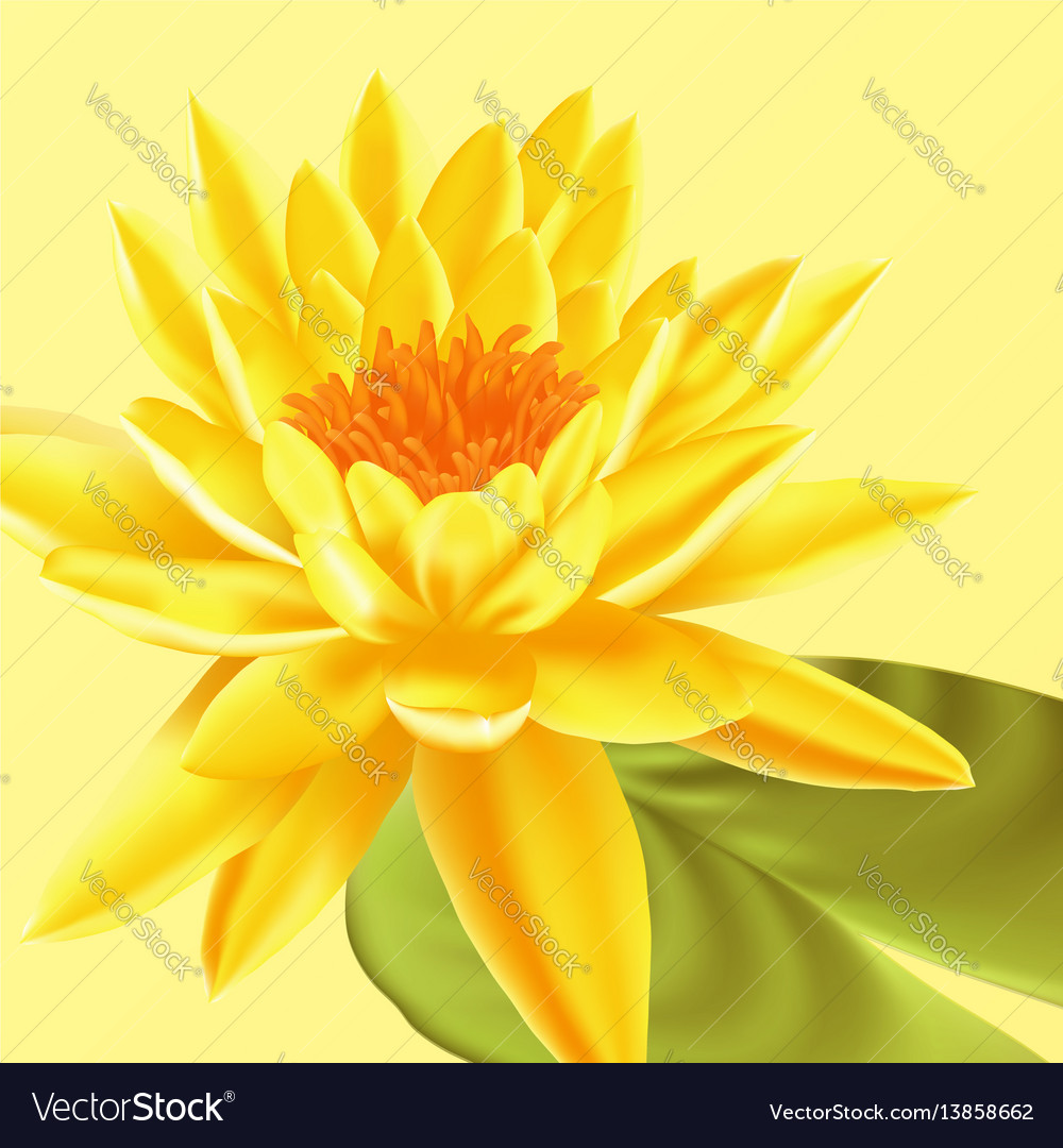 Lotus Flower Floral Background Royalty Free Vector Image