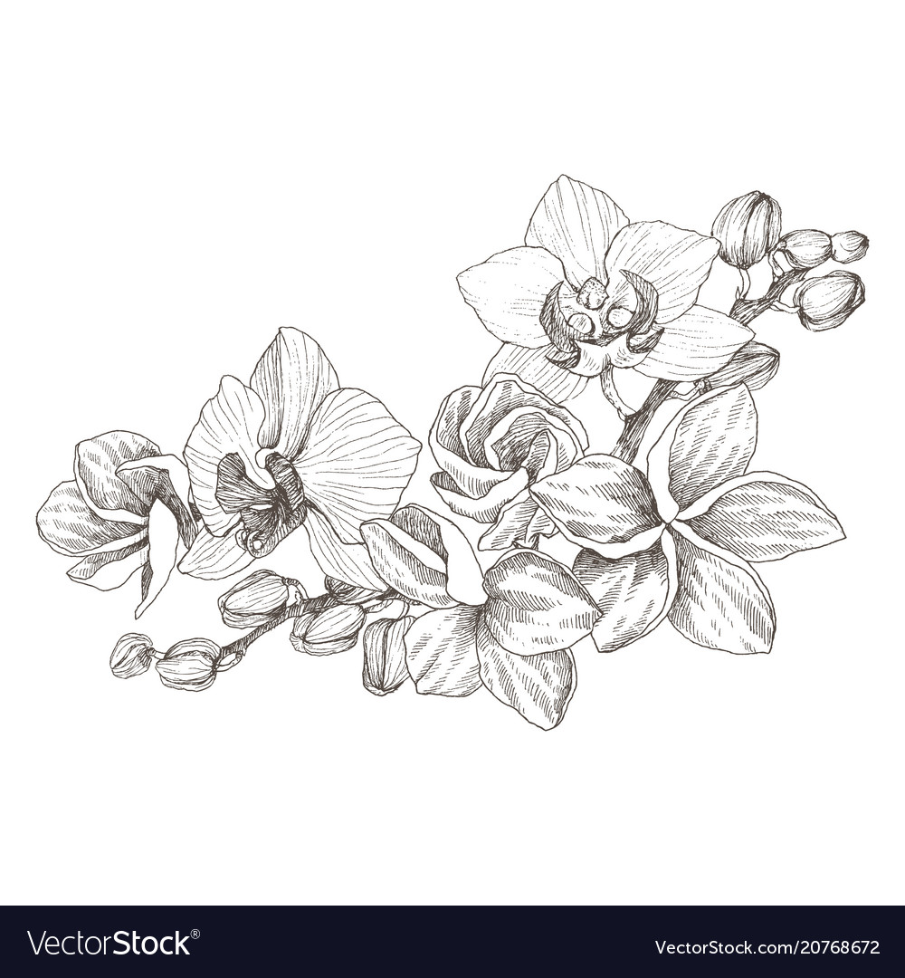 Hand drawn black outline bouquet with orchid and vector image izmirmasajfo