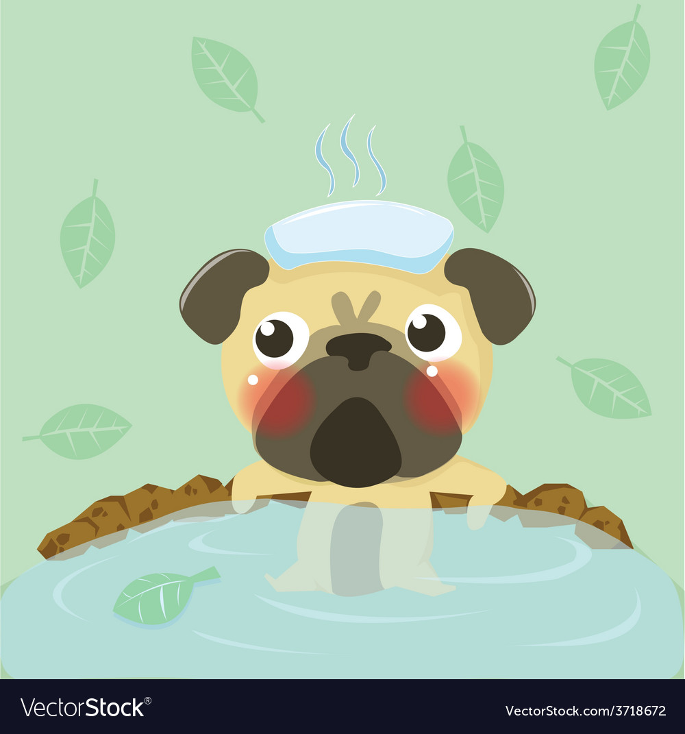 Pug relax in warm water