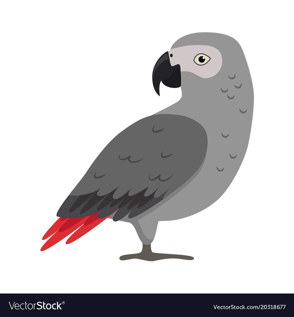 African grey parrot silhouette icon in flat style