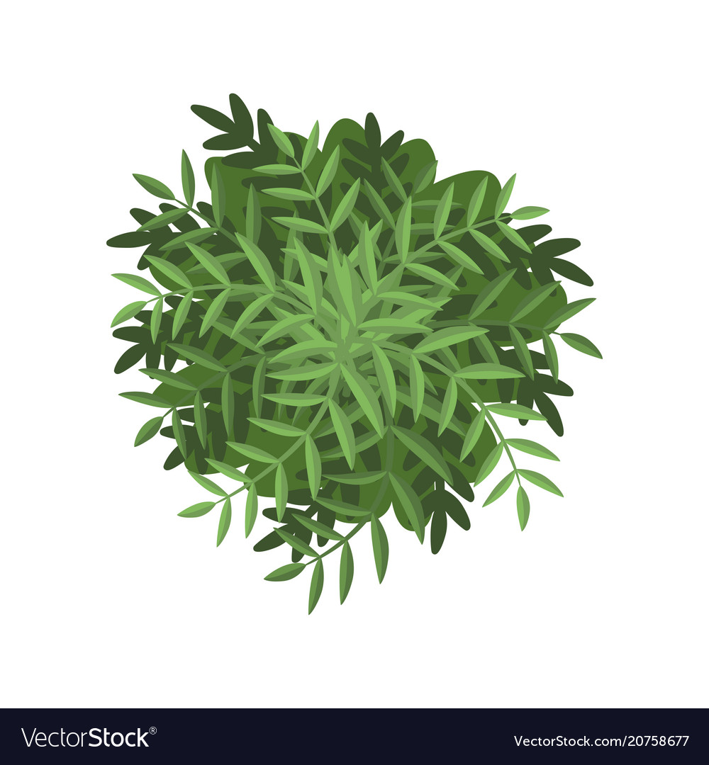 Green Bush Landscape Design Element Top View Vector Image