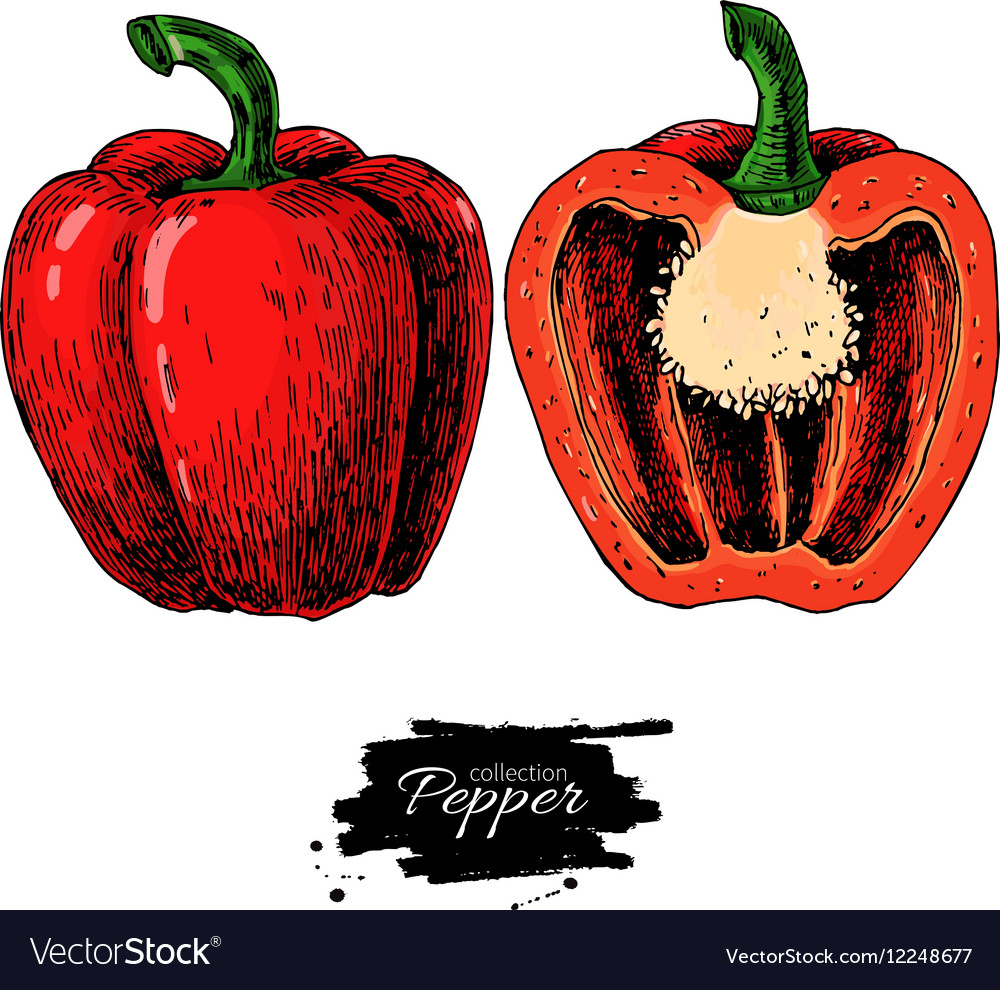 Pepper hand drawn Vegetable