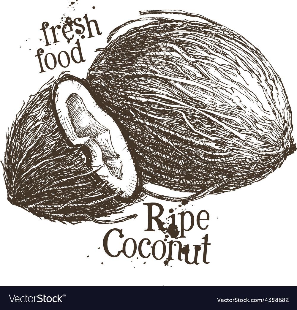 coconut logo design template fresh food or vector image
