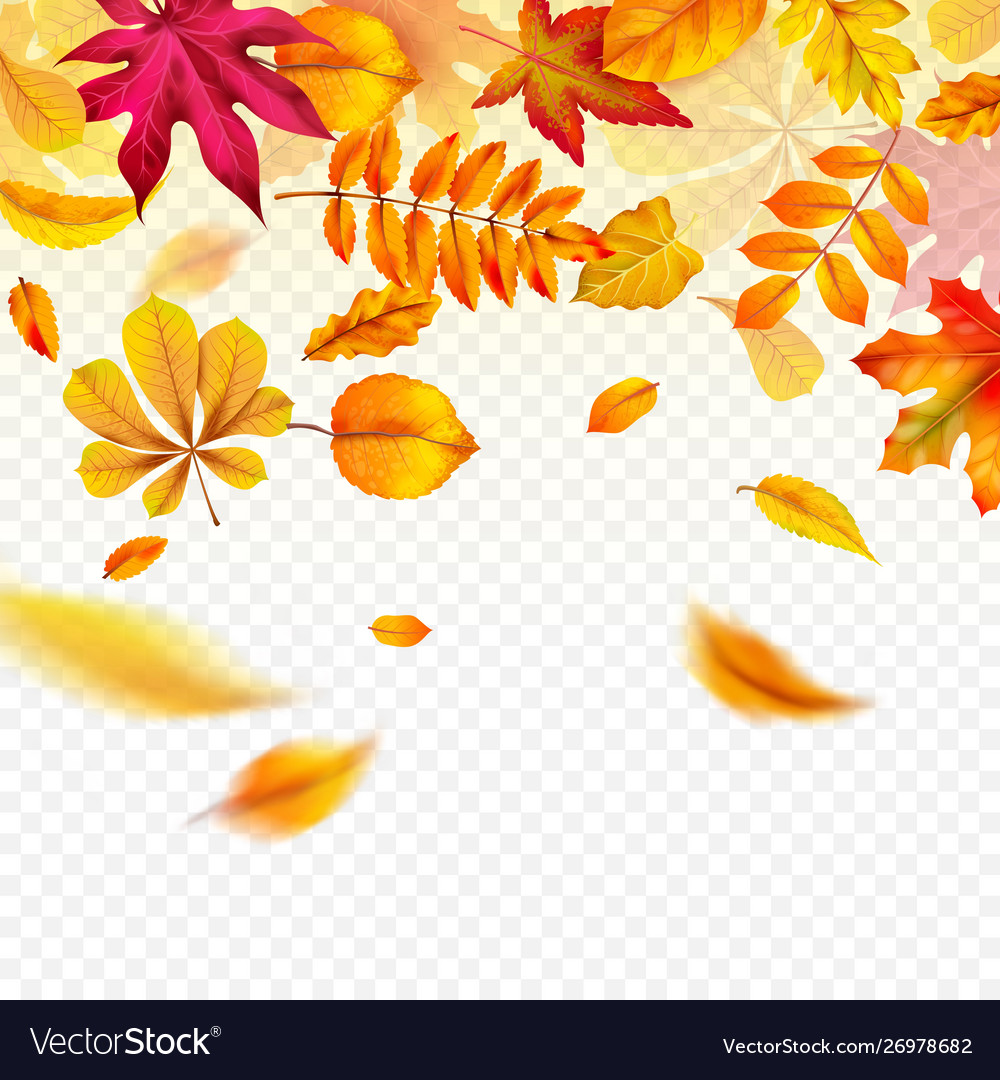 Falling autumn leaves flying yellow fall foliage vector