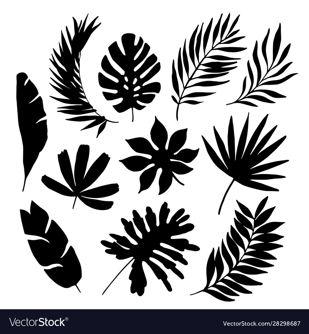 Tropical Leaf Silhouette Elements Set Isolated On Vector Image Download the perfect tropical leaves pictures. vectorstock