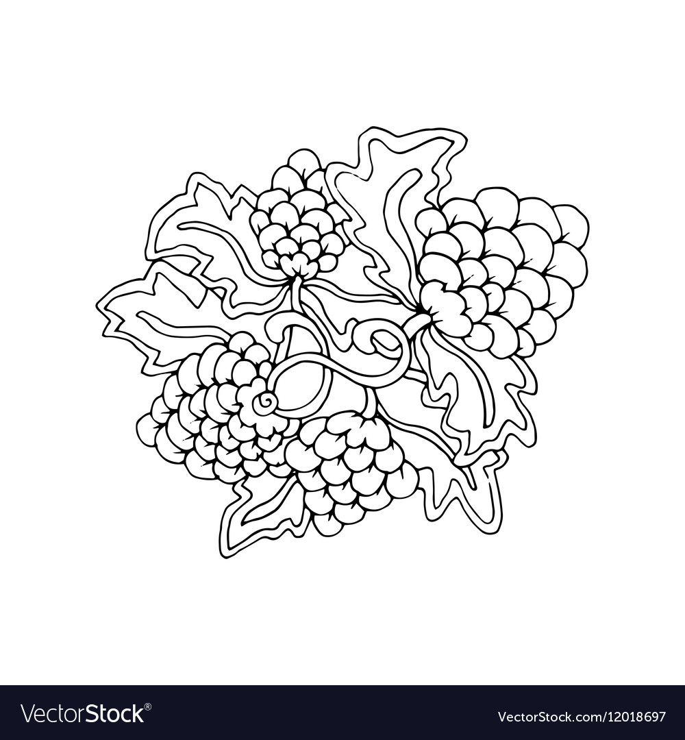 Hand drawn doodle outline grape fruit magic line vector image