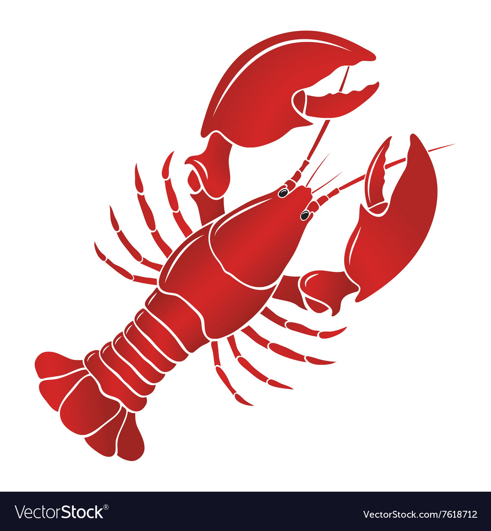 Boiled lobster on a white background