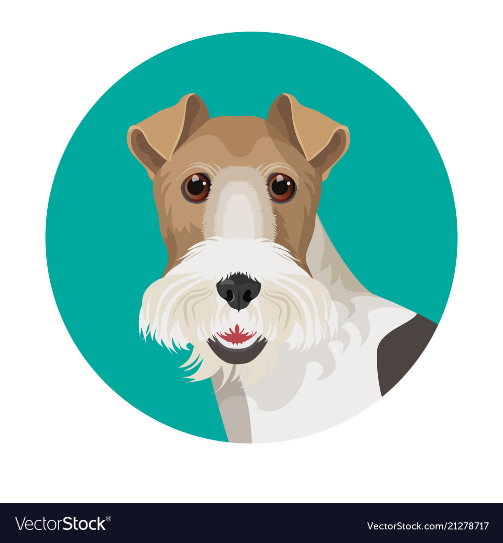 Fox terrier in color circle colorful