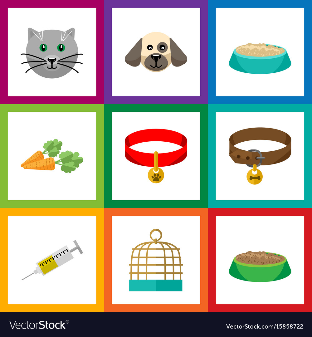 Flat icon animal set of vaccine kitty collar