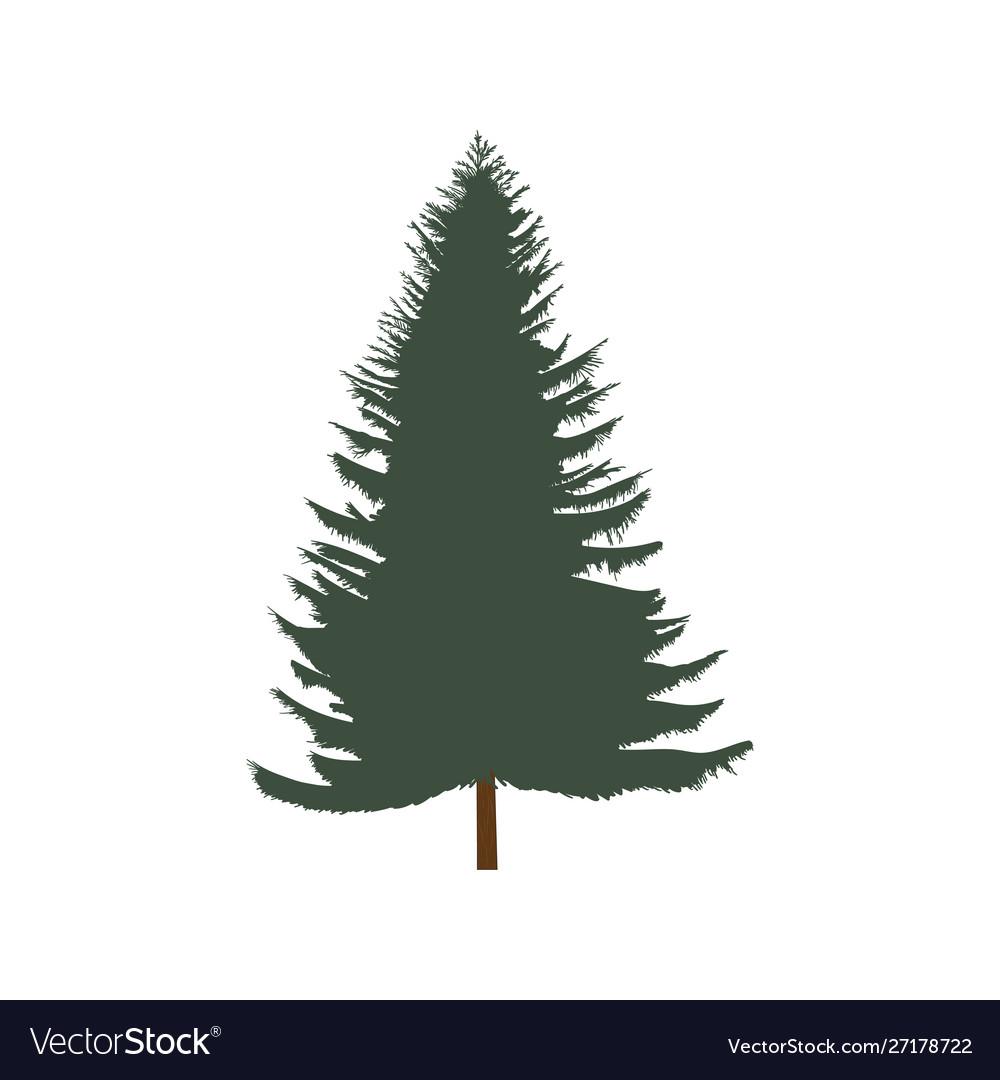 Lush spruce isolated on white background