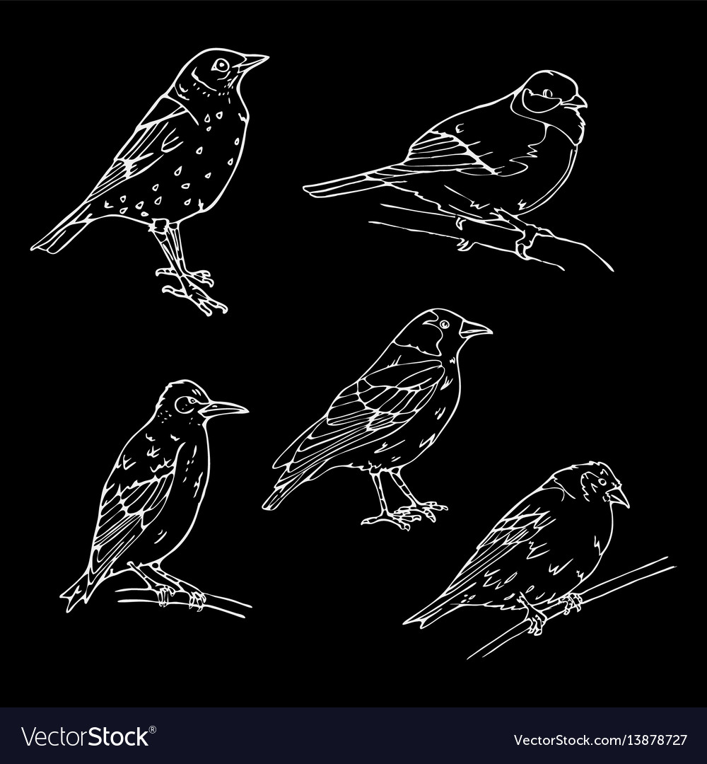Birds engraved style stamp seal simple sketch