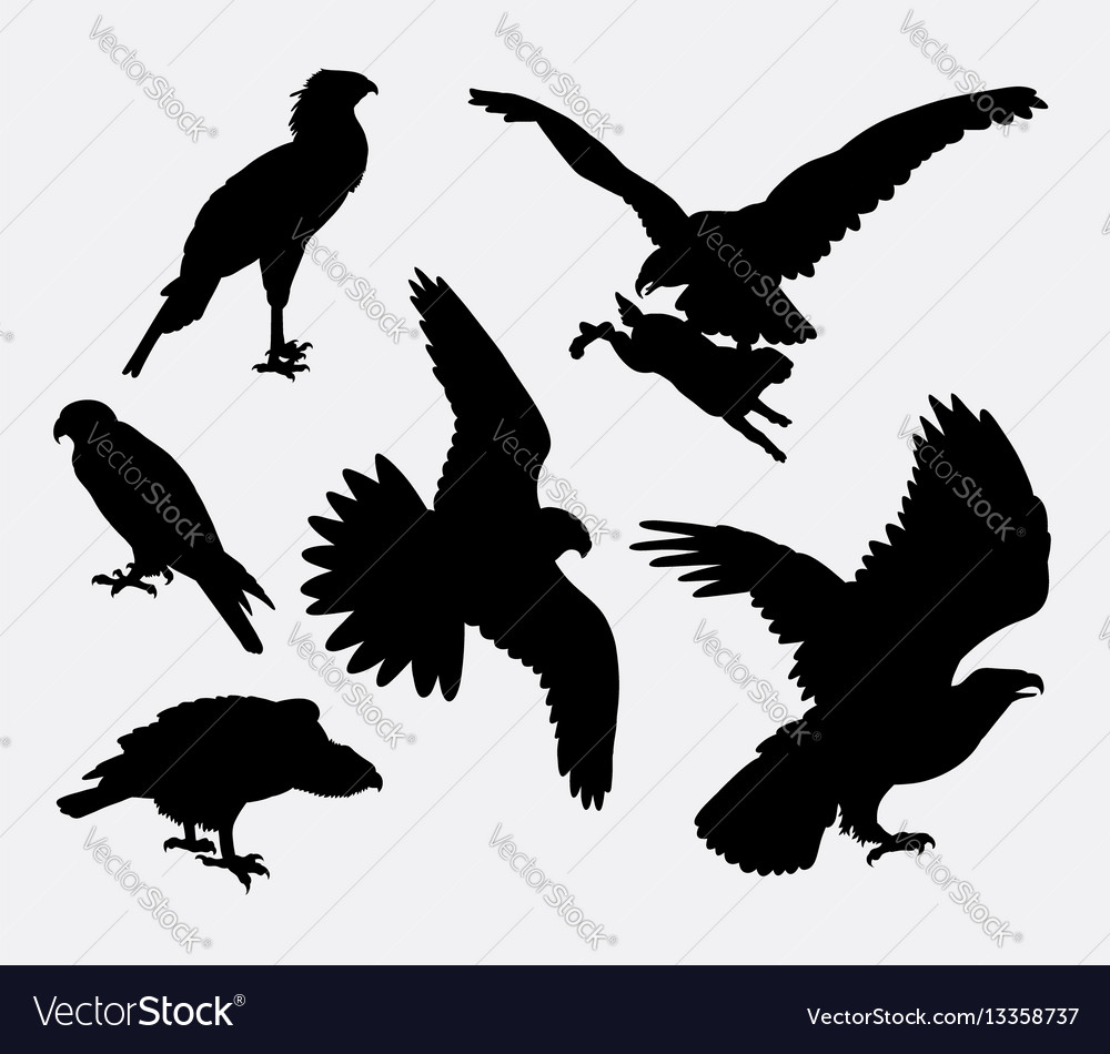 Eagle hawk falcone animal silhouette