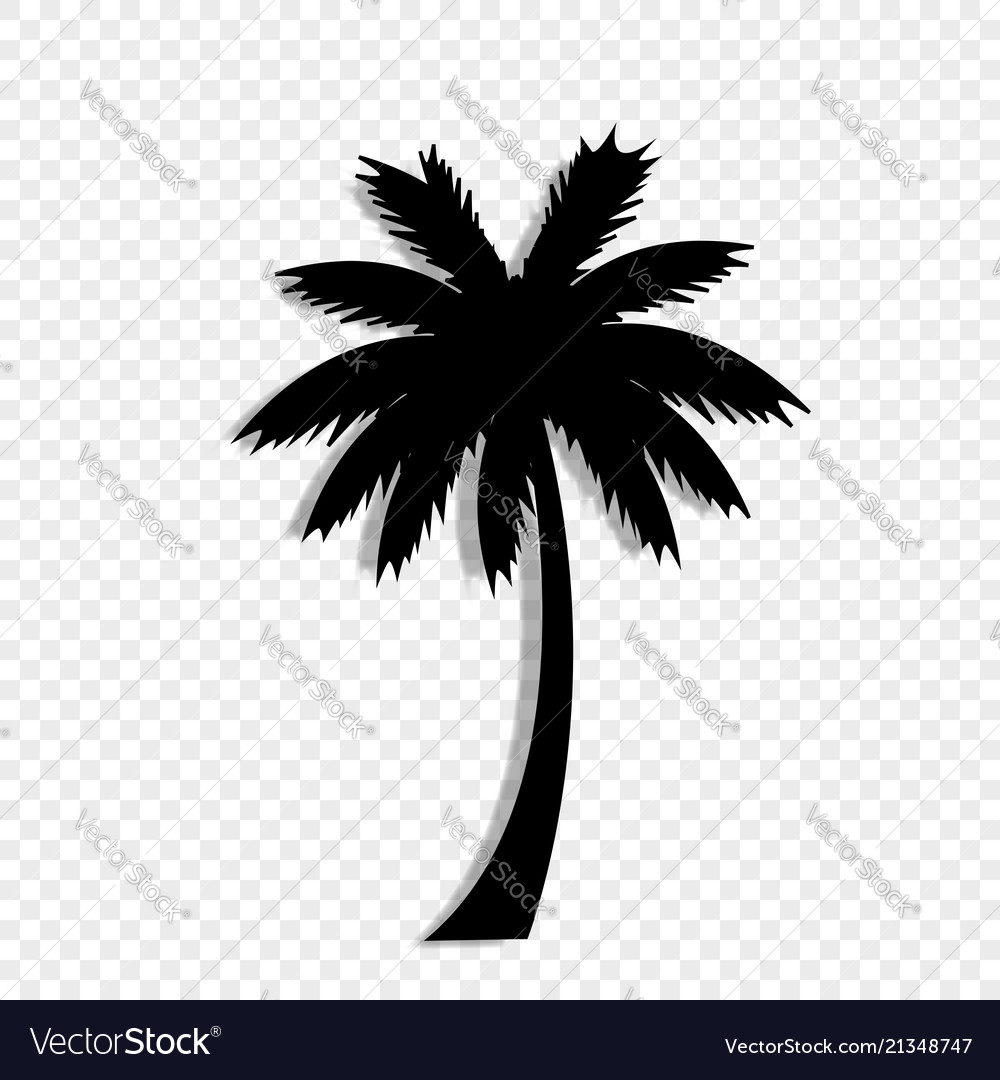 Black silhouette of palm tree icon on transparent