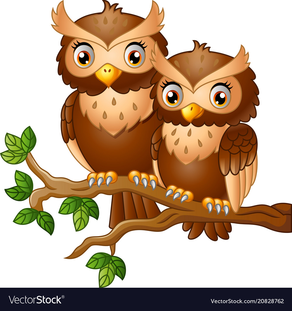 Cute couple owl on the tree branch