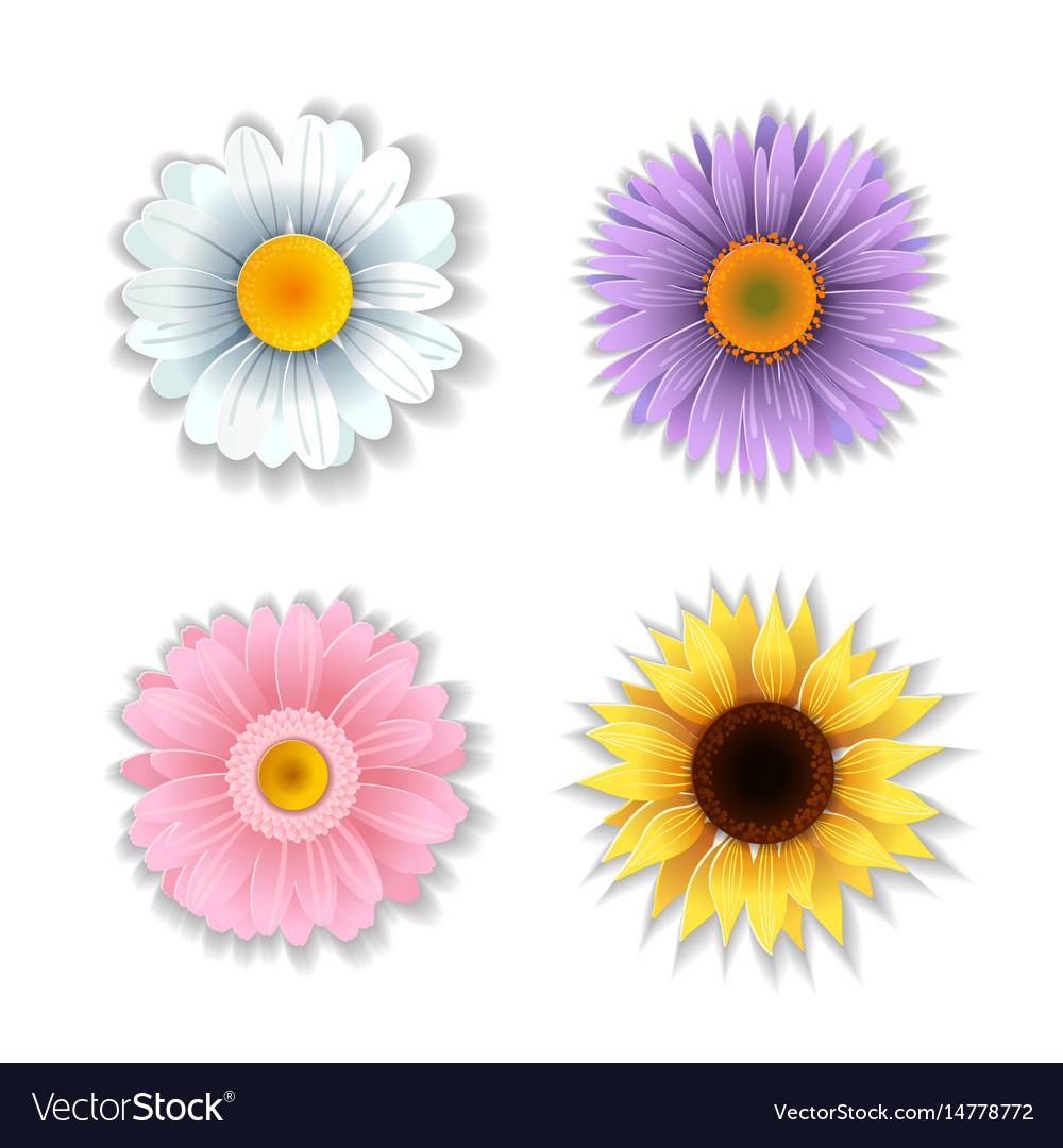 Set of paper art flowers