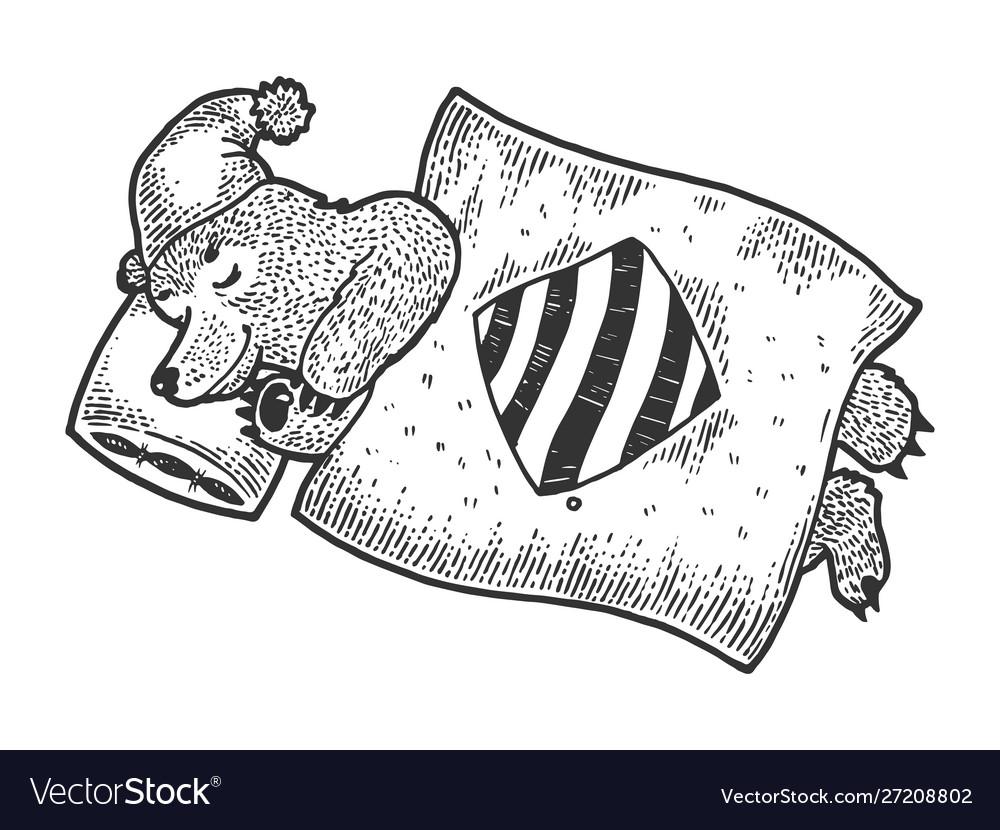 Cartoon sleeping bear sketch engraving