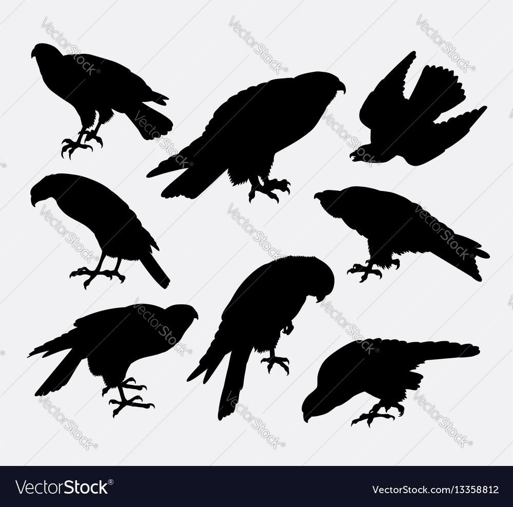 Eagle falcon hawk bird animal silhouette