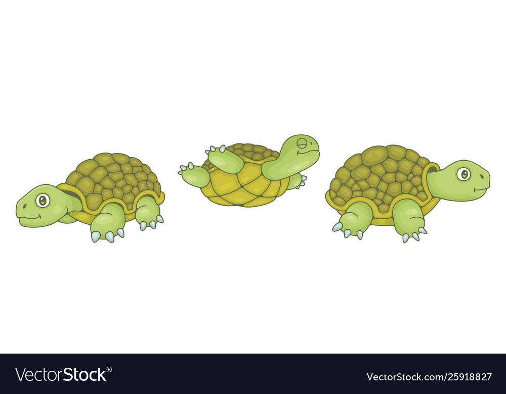 Set turtles