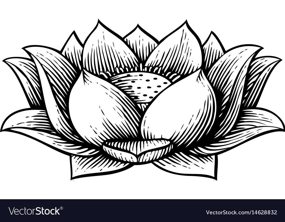 Lotus flower vintage engraved