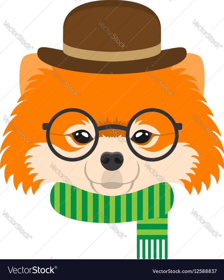 Portrait of pomeranian dog with glasses and hat in