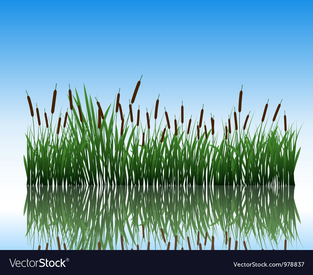 Water grass and flower