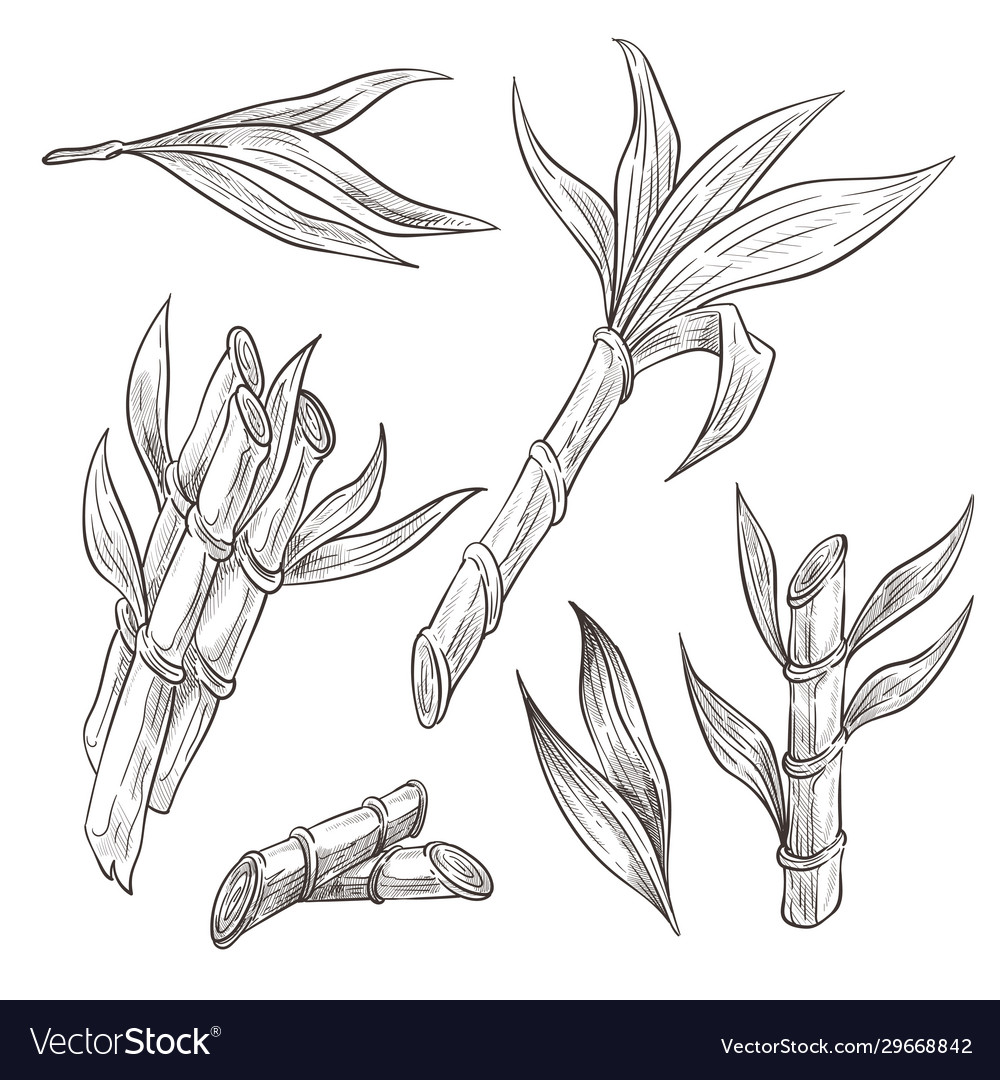 Bamboo Logs With Leaves Hand Drawn Sketch Vector Image