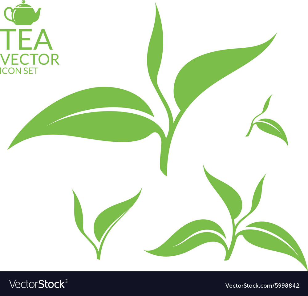 Tea Isolated leaves on white background