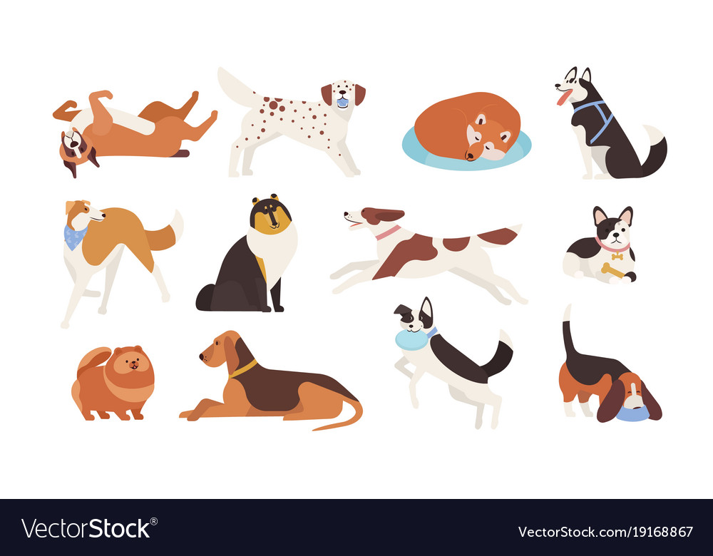 Collection of funny dogs of various breeds playing vector image