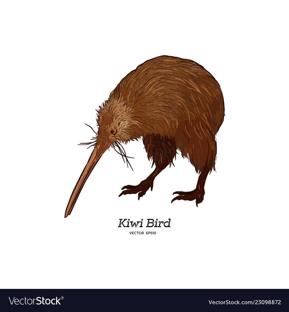 Kiwi Bird Hand Draw Sketch Royalty Free Vector Image