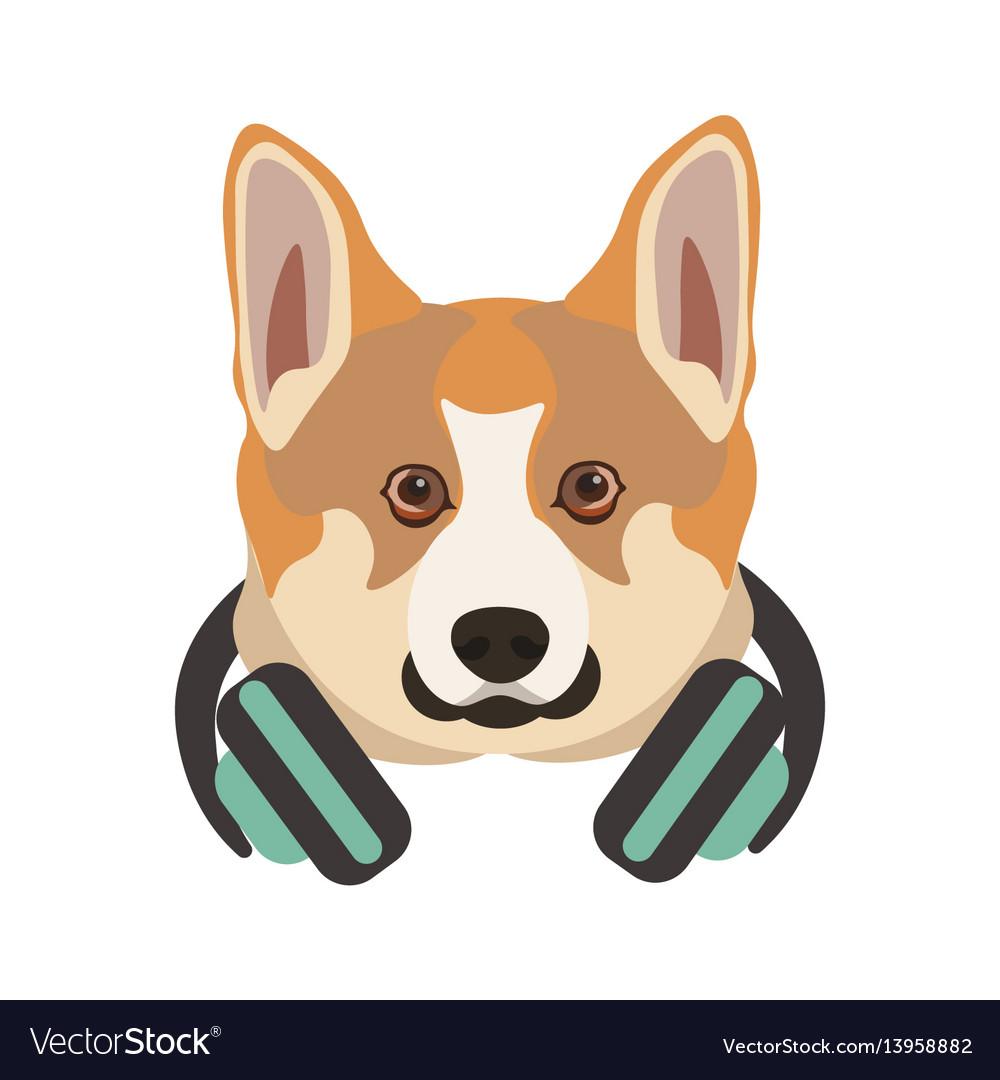 Basenji breed dog portrait with headphones on neck
