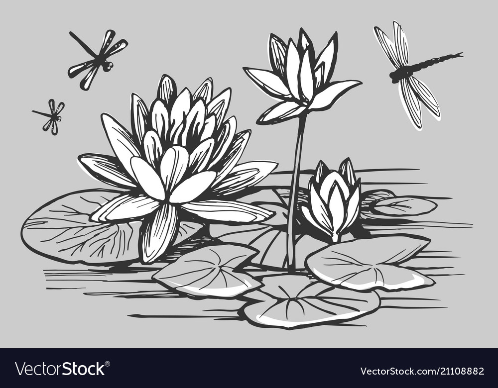 White flowers a water lily