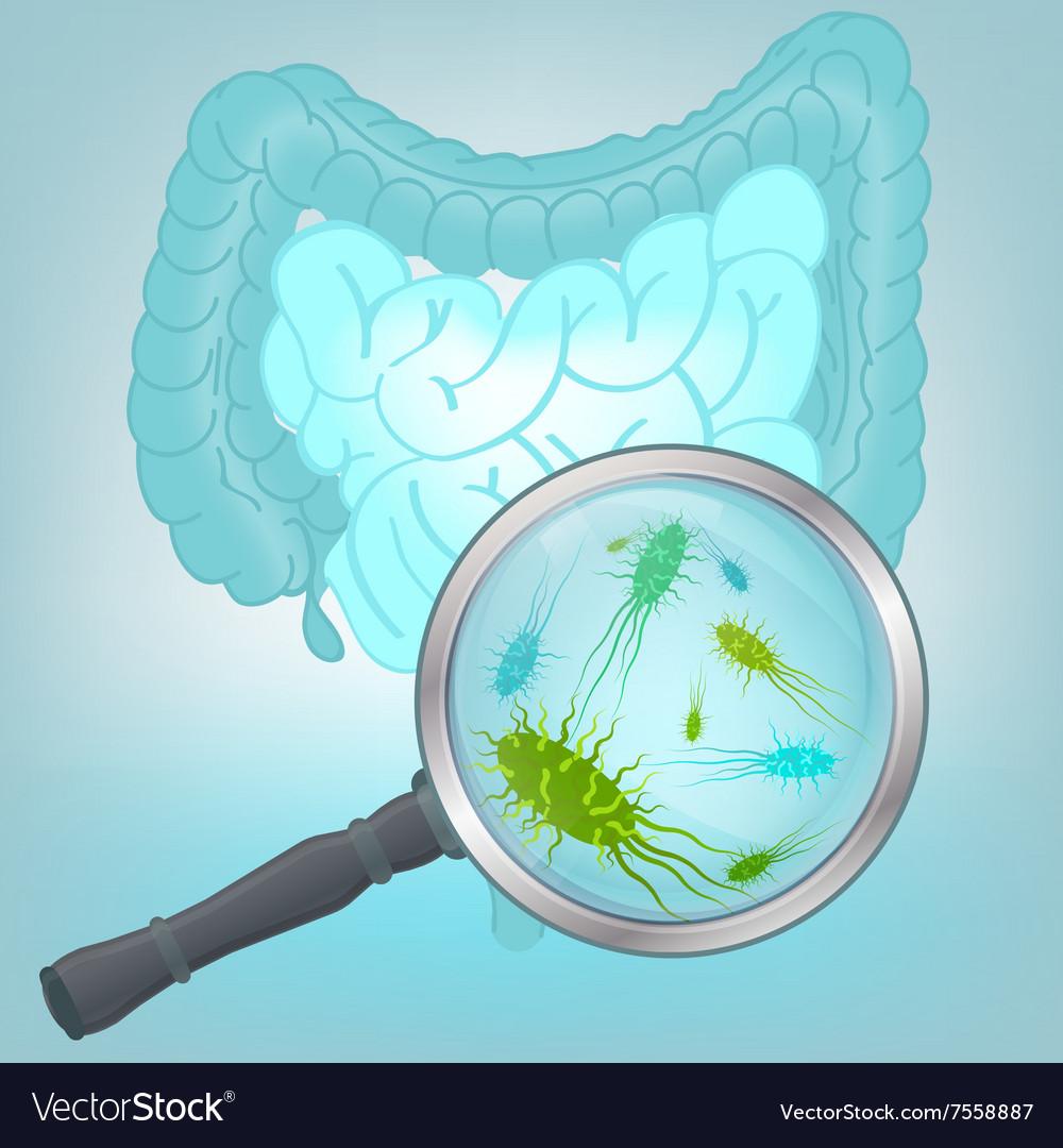 Bacteria Flora