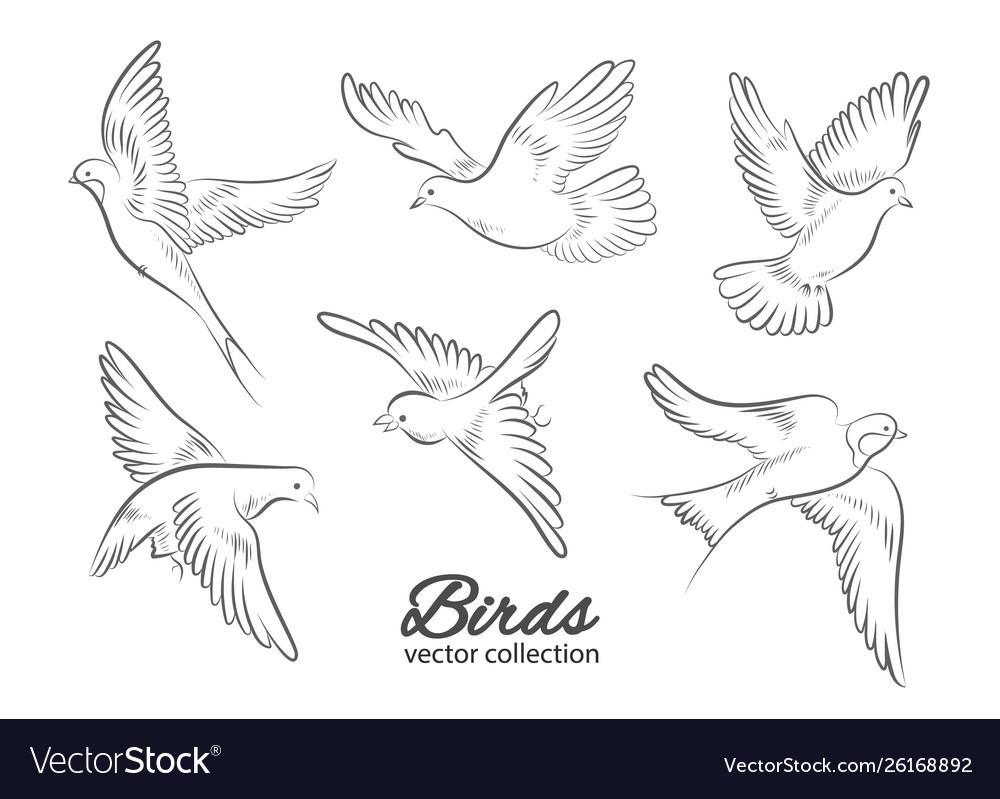 Set hand drawn birds isolated on white