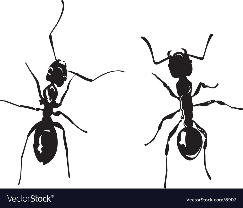 Two ants vector image