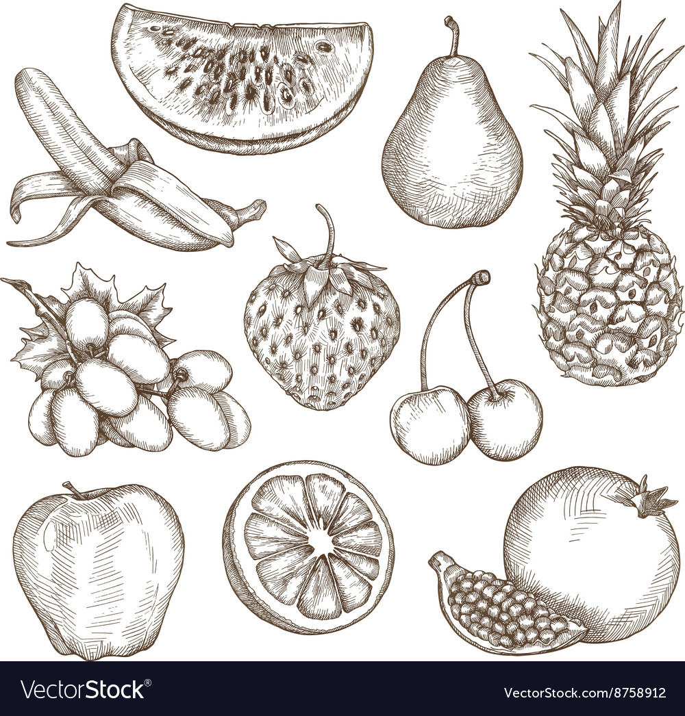 Fruit sketches hand drawing