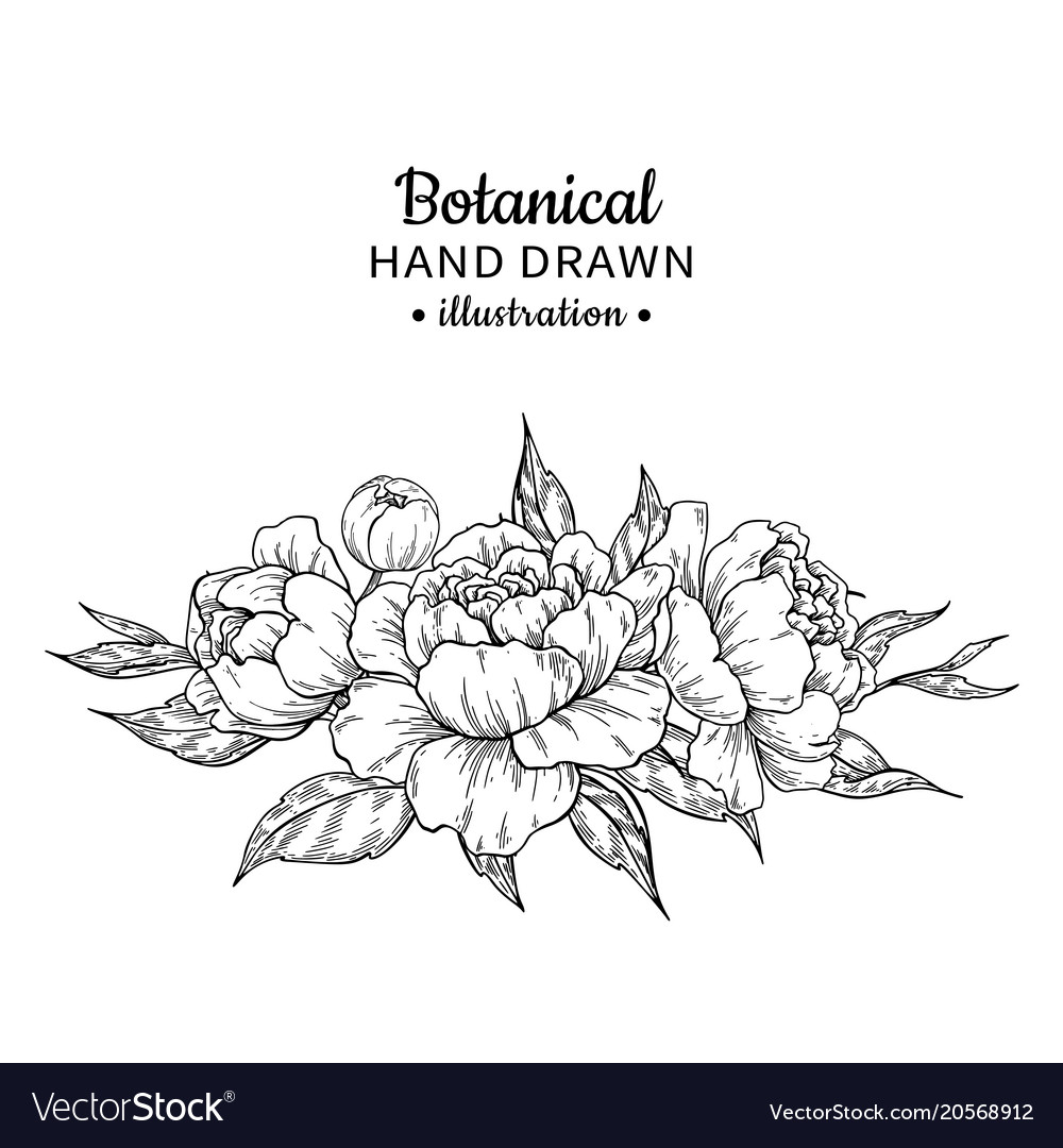 Vintage flower bouquet drawing peony vector image