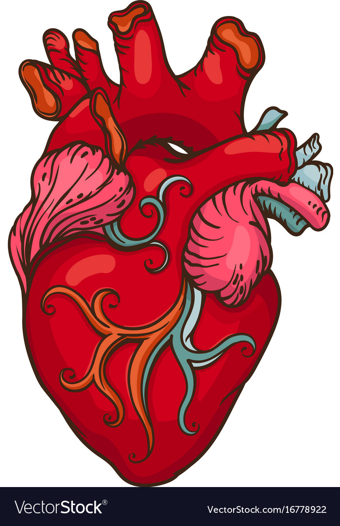 drawing of stylized human heart royalty free vector image rh vectorstock com human heart vector art human heart vector icon