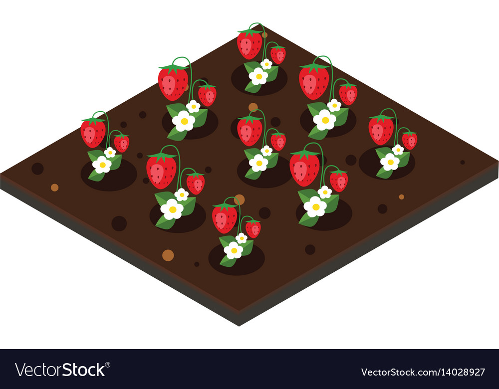 Garden in spring isometric icon set strawberry