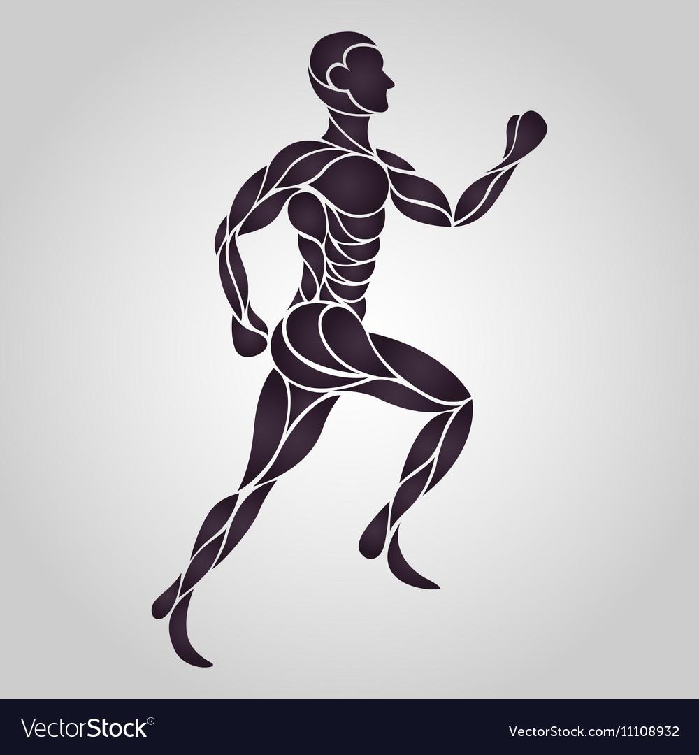 Anatomy Drawing of a Human Man Royalty Free Vector Image