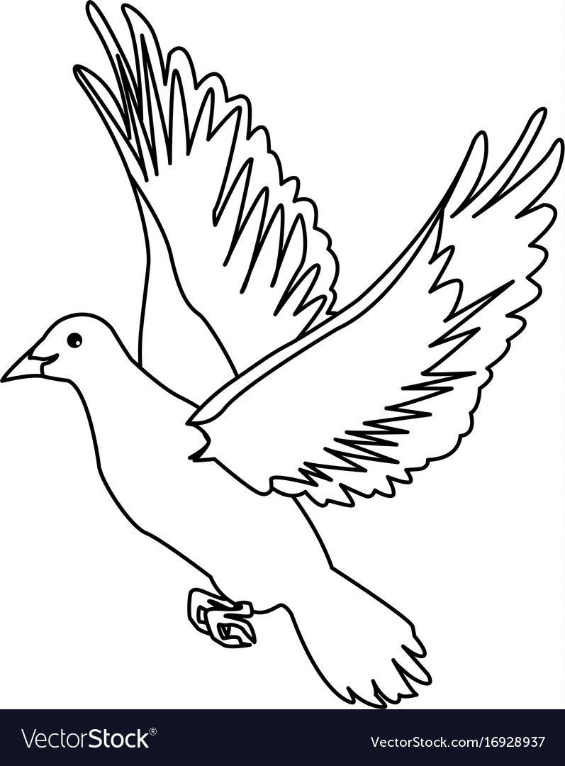 Flying White Dove On White Background As Symbol Of