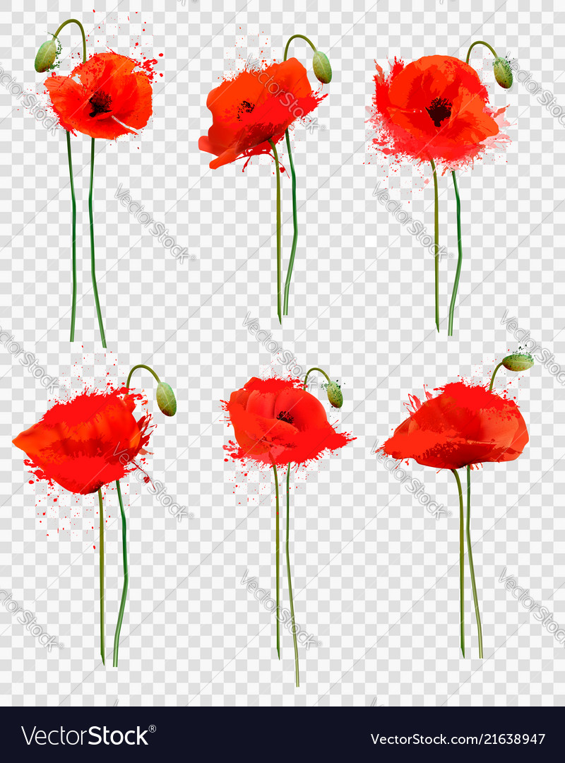 Set Of A Red Poppies Flowers On Transparent Vector Image