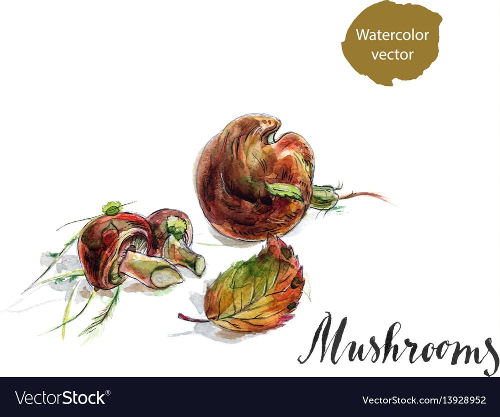 Edible mushrooms boletus with leafs and moss