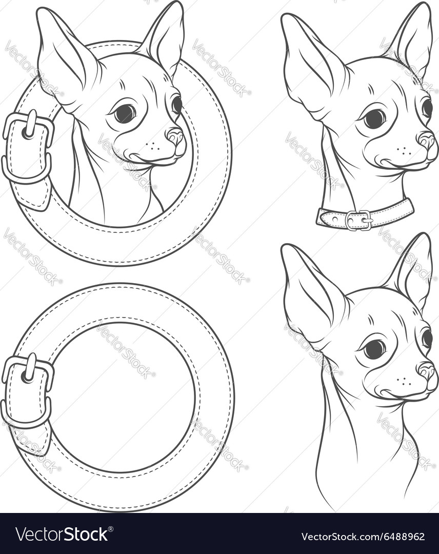 A set drawing chihuahua in collar