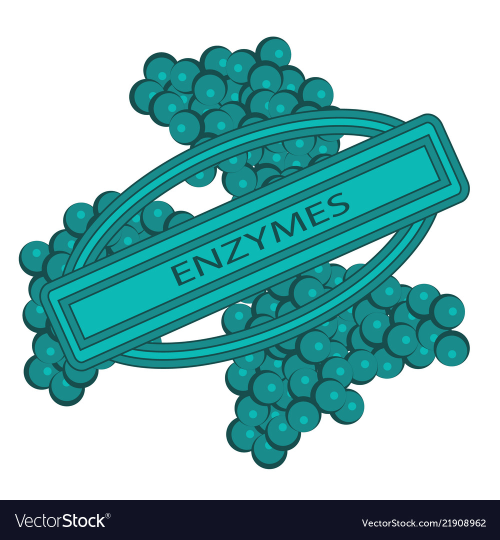 Shape of enzymes cells