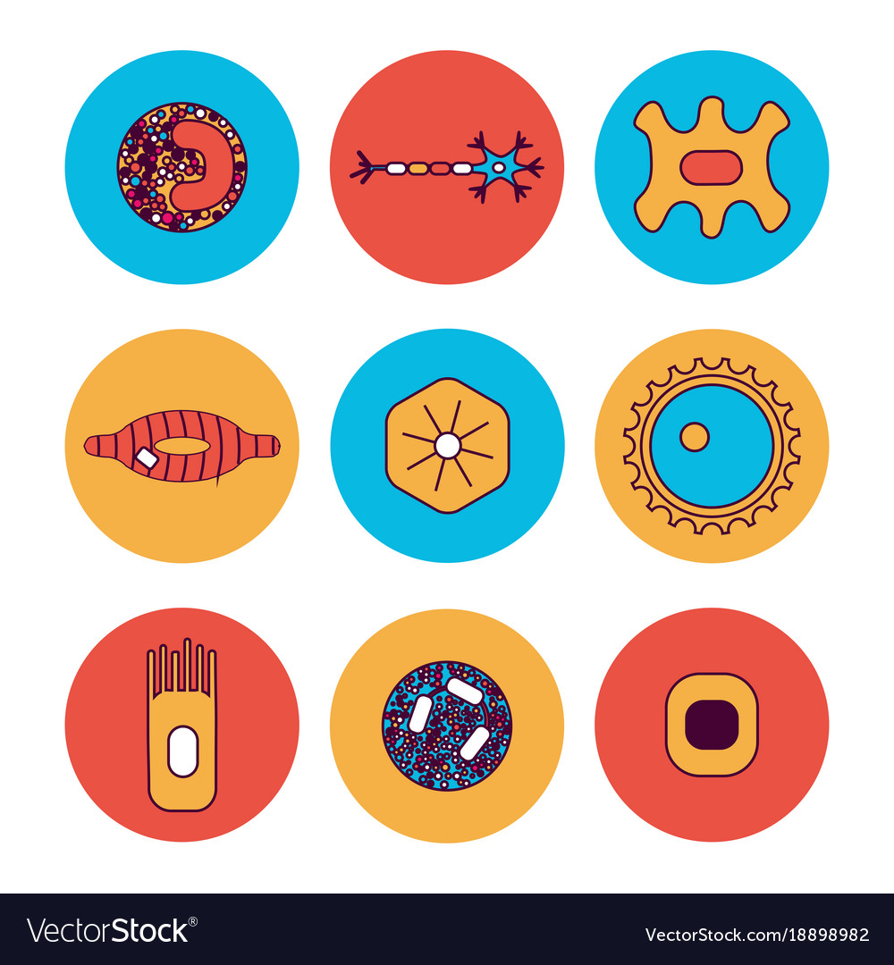 Different Human Cell Types Royalty Free Vector Image