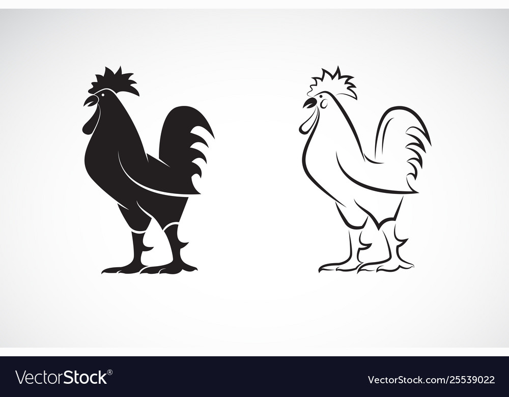 Rooster or cock design on white background animal