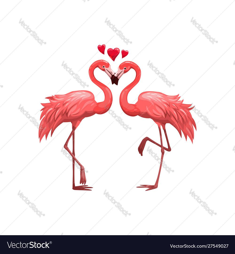 Pink flamingos birds in love