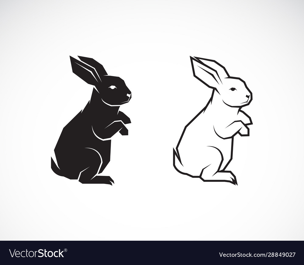 Rabbit design on white background wild animals
