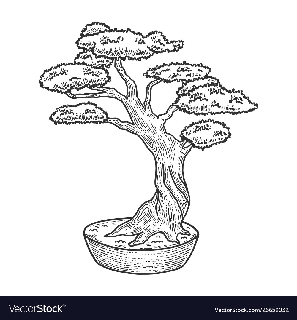 Bonsai Tree Sketch Engraving Royalty Free Vector Image